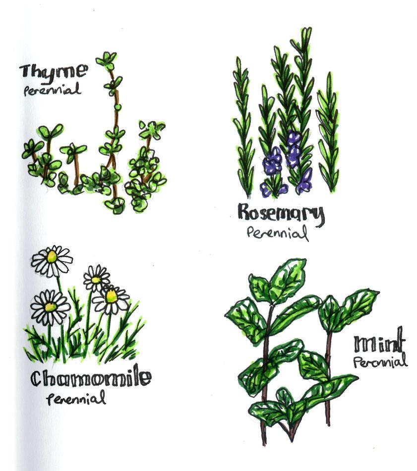 More plant sketches by ApianJunkyard