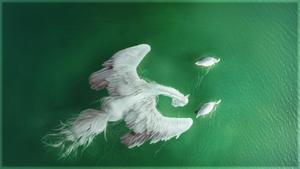 Swan Lake by Charlie--X