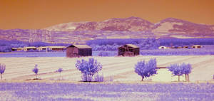 Andalucia - Malaga's fields in infrared