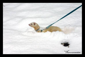 snow ferret by narcosomniac
