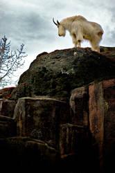Billy Goat Gruff by shadowcon