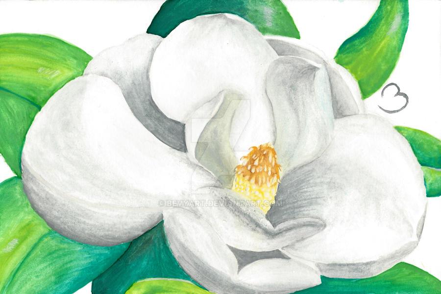 Magnolia by BevyArt