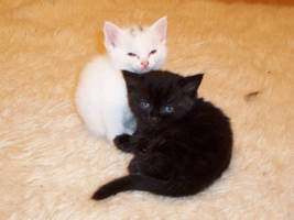 kittens by kristina-xXx