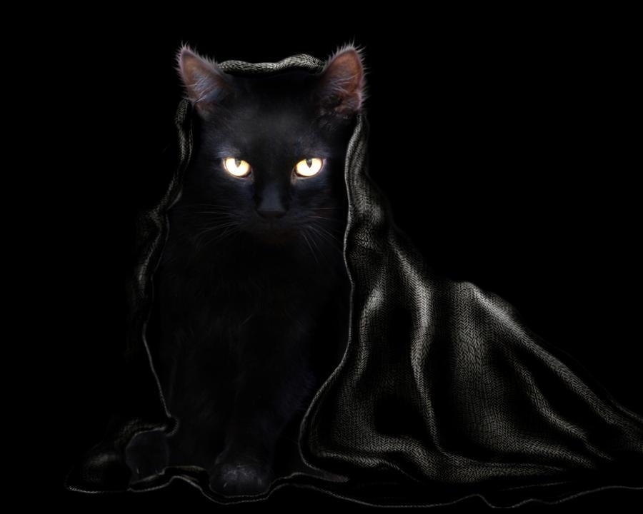 Katze-im-Sack's Profile Picture