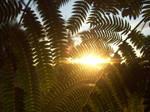 Beautiful Sunset Tree