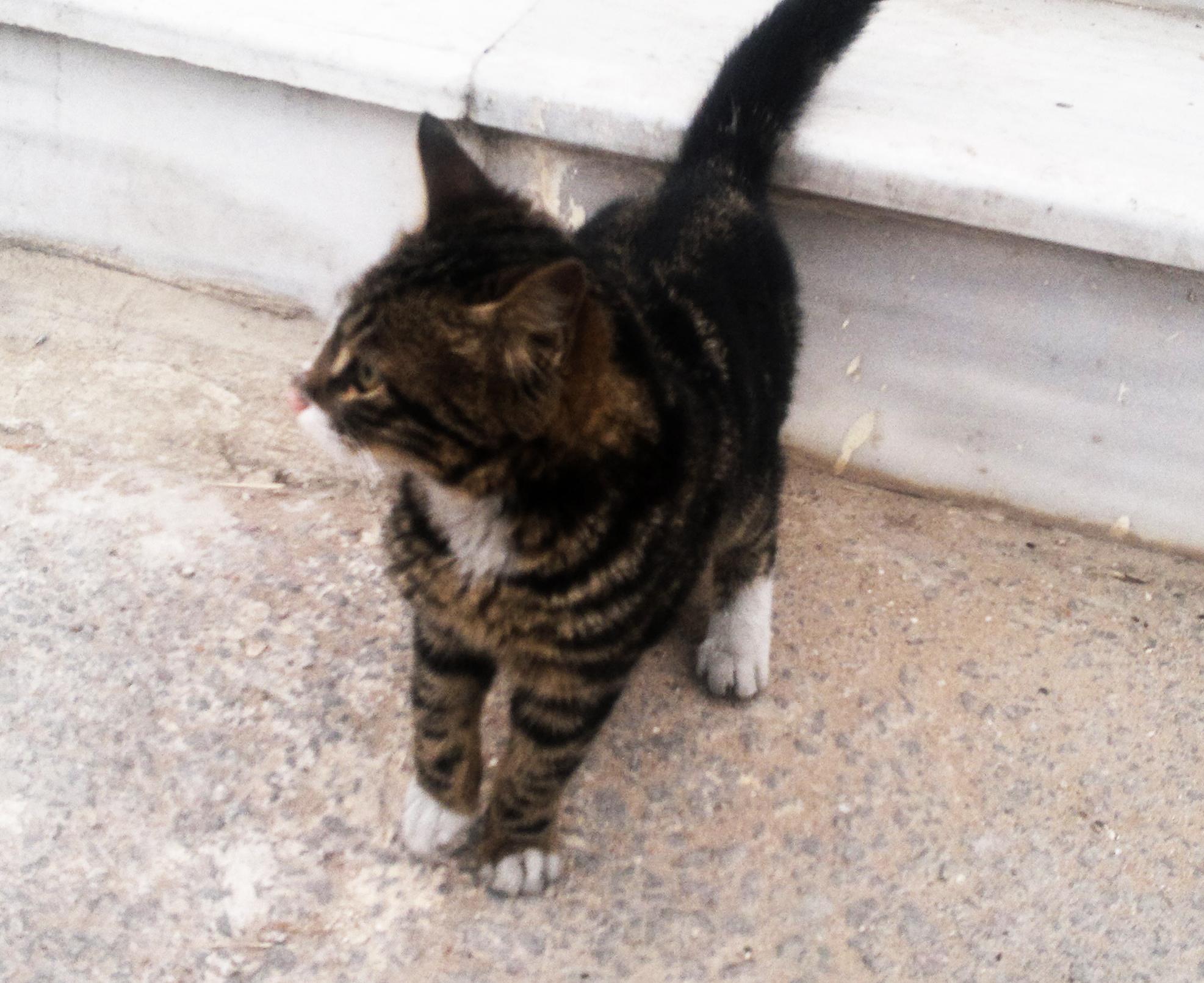 Street Cat by Alialolo