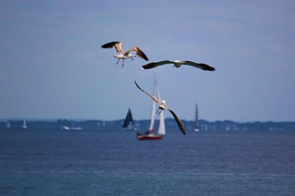 https://img00.deviantart.net/3841/i/2017/107/1/3/les_oiseaux_marins_by_bloodyxkiss-db66h04.jpg