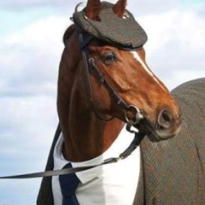 King-Of-Horses's Profile Picture