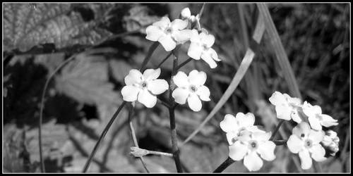 Pale Flowers by keot