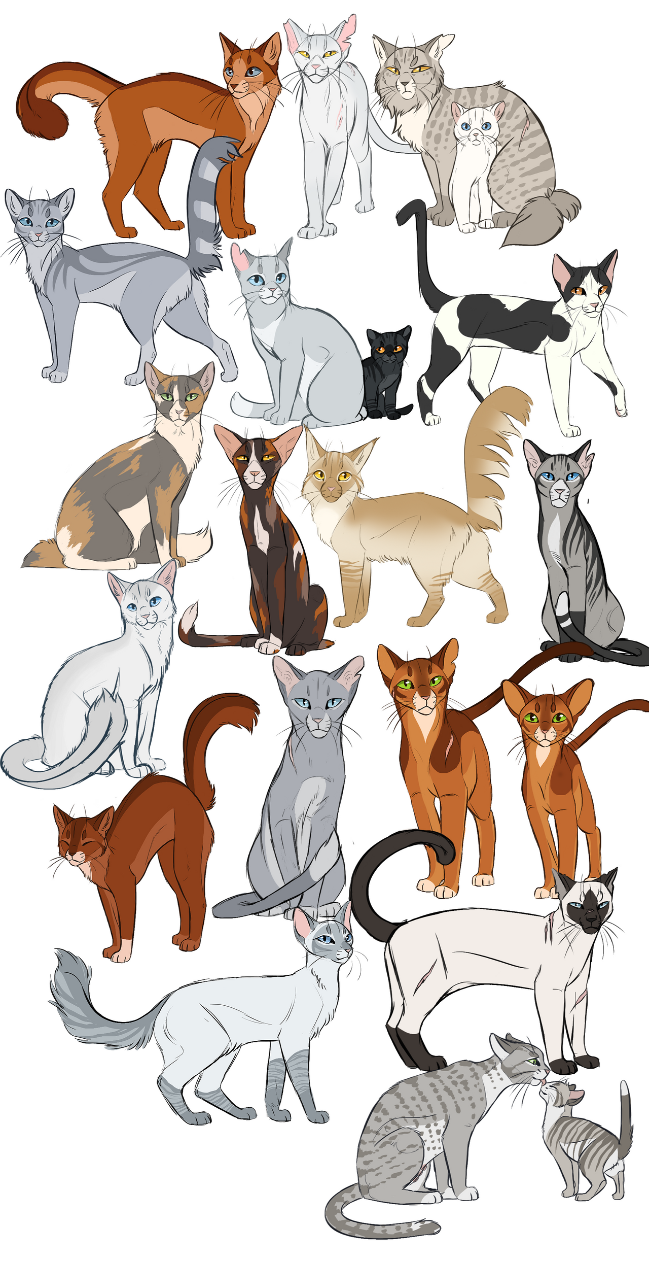 Warrior Cats Black And White