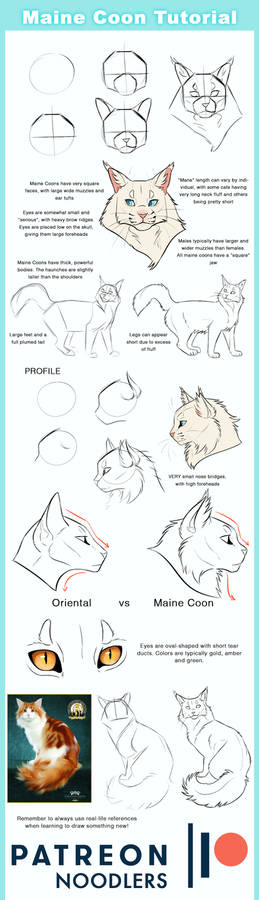 Maine Coon Tutorial