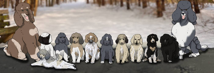 Poodle Group