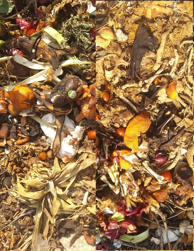 Compost   1a