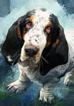 Basset Hound - Beasley