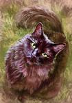 Bella - Pet Commission