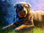 Lady Blue Rottweiler