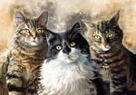 Tyra, Bobo and Gizmo