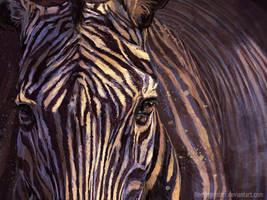 Zebra by FleetingEmber