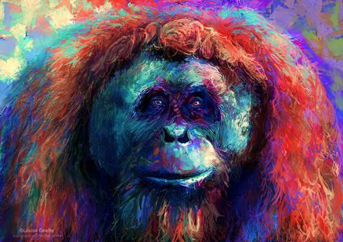 Rainbow Orangutan