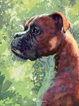 Boxer - Jason