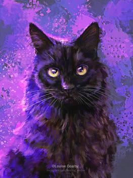 Lady - Black Cat