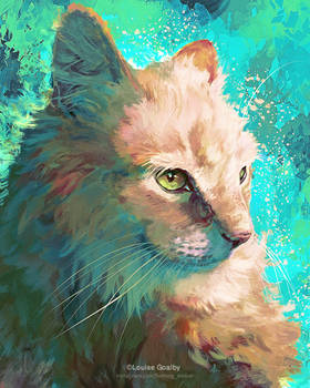 Cat - Silas