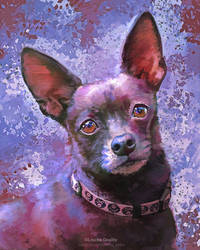 Booboo Chihuahua