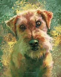 Gatsby - Terrier