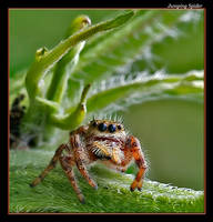 Little Jumper, Big Eyes by boron