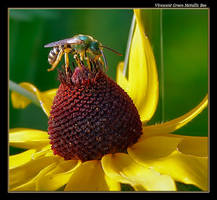 Green Bee 08 by boron