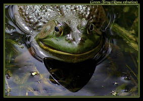 Green Frog Grimace by boron