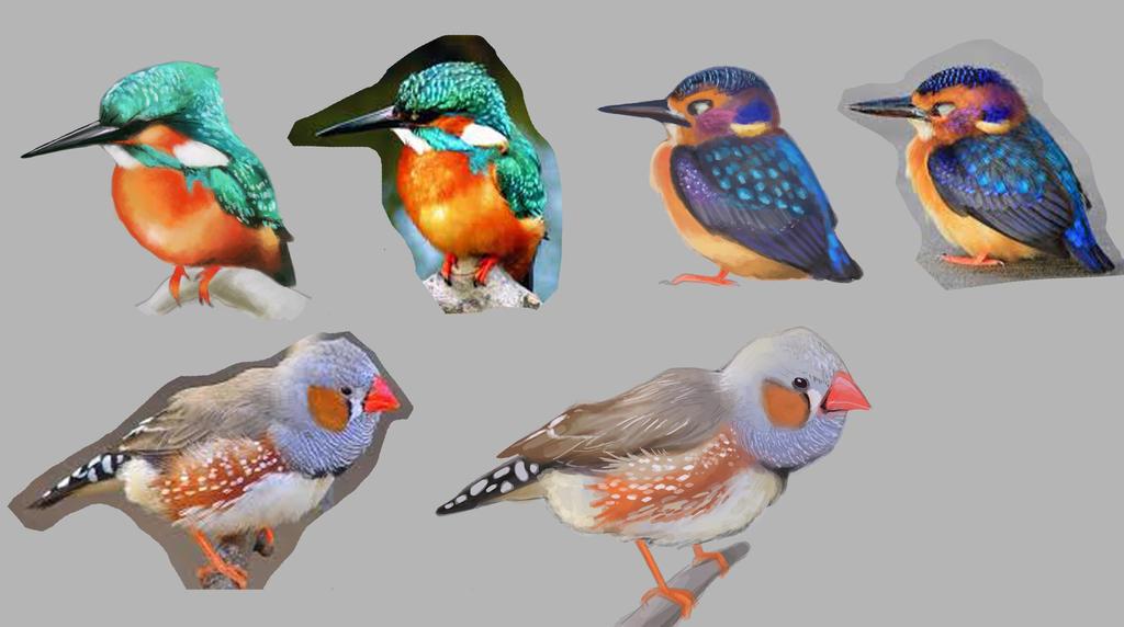 bird study by iumba