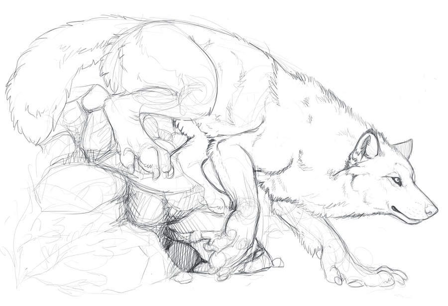 Anthro Wolf Tutorial Anthro Wolf Sketch by Lefice