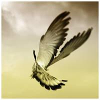 Freedom in Limits III by virtud