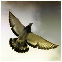 Freedom in Limits V by virtud