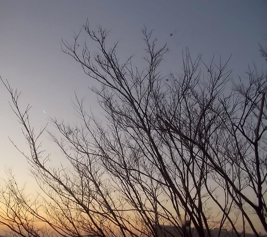 Sunrise-branches n Moon-1-8-13 by Bizee1