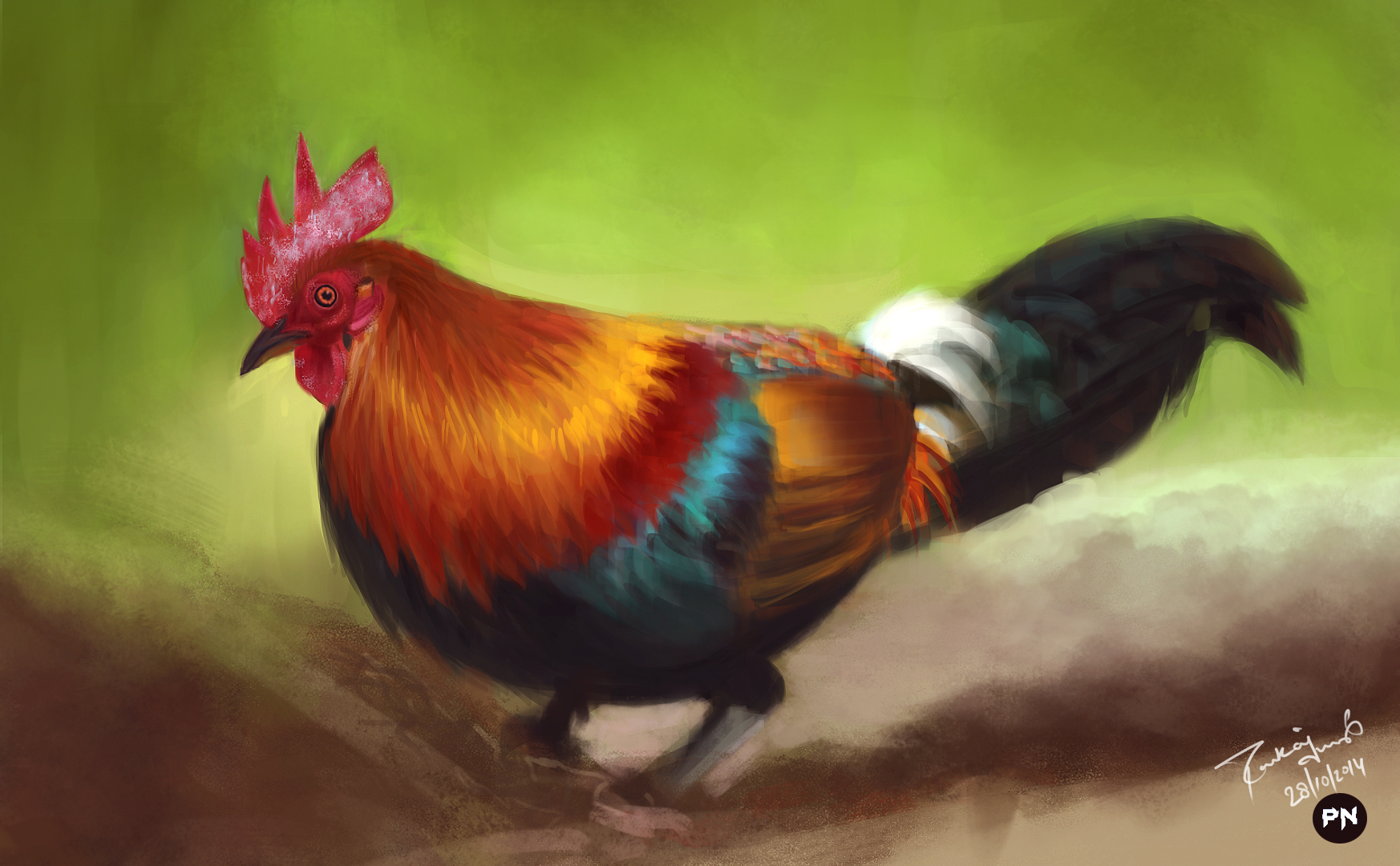 colorful cock by pankajnegi
