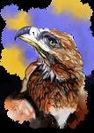 Wedgetailed Eagle Australian Bird by LorraineKelly