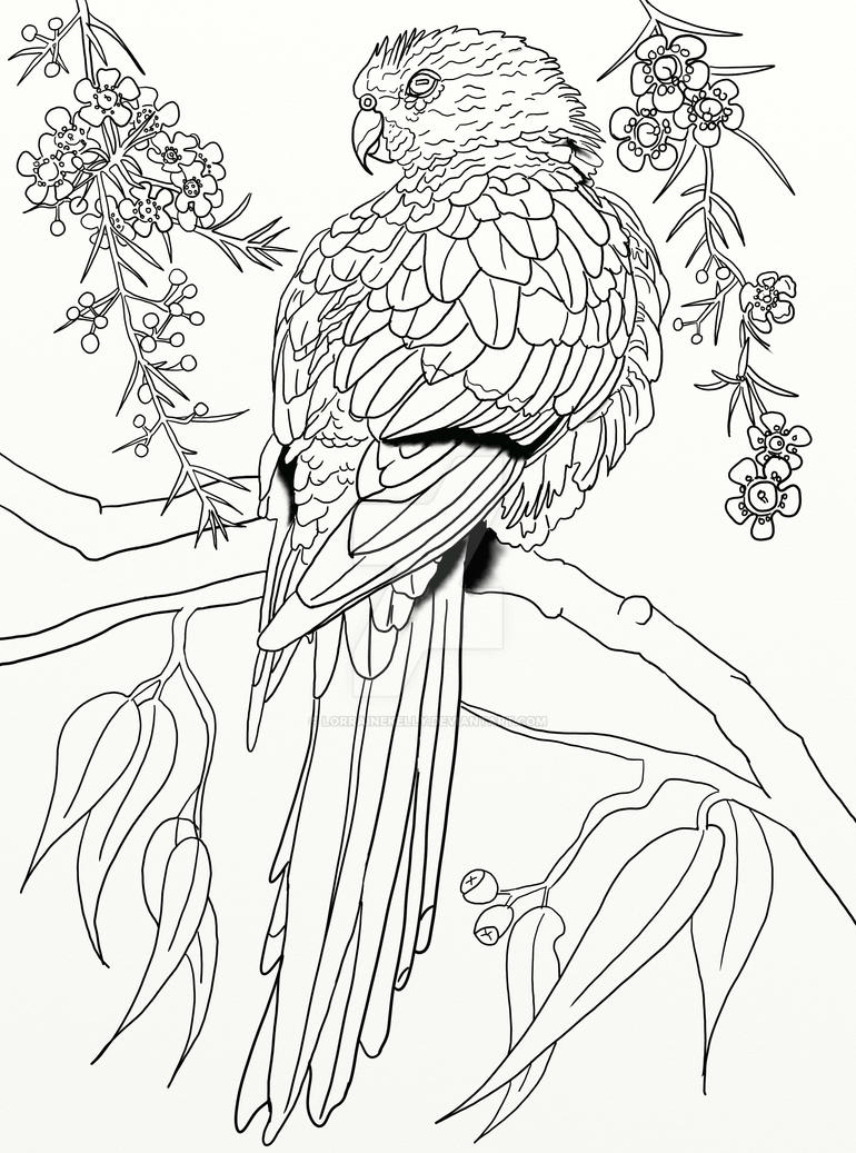 australian parrot coloring page pg 3 by lorrainekelly