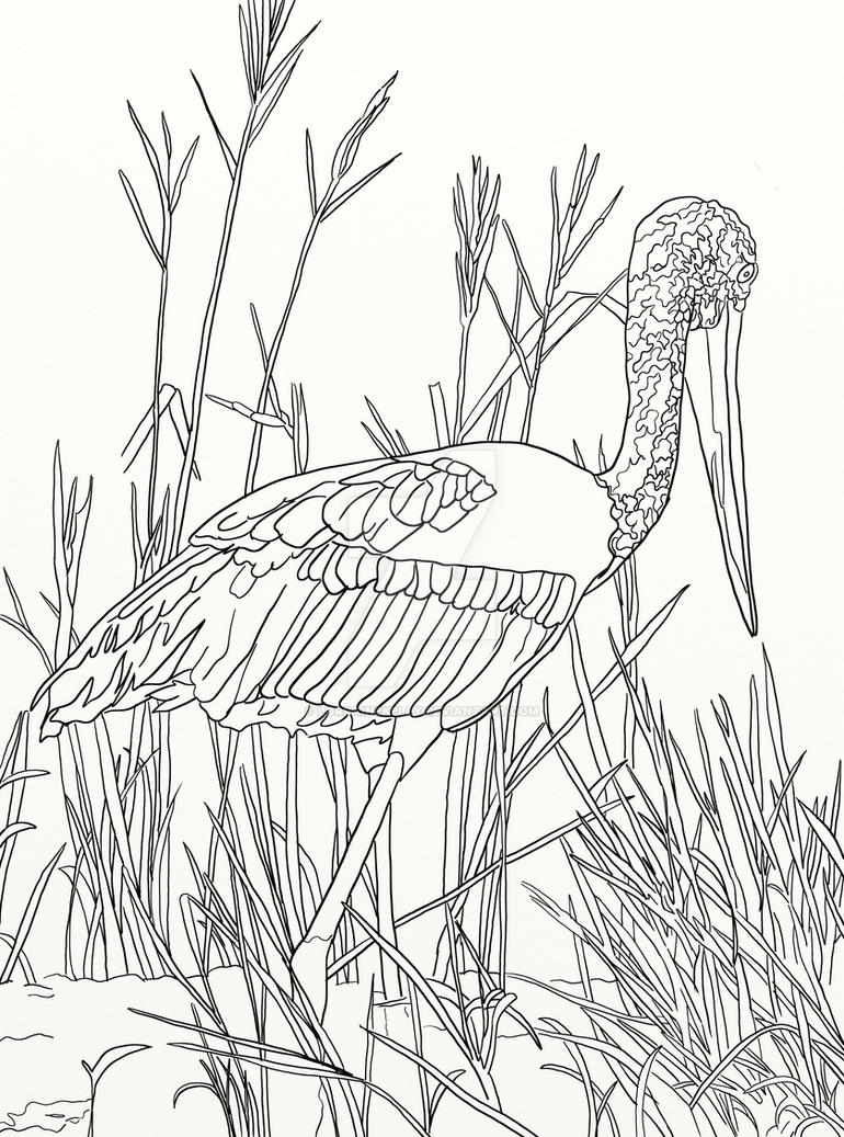 Page 14 Of Australian Birds Adult Coloring Book By LorraineKelly