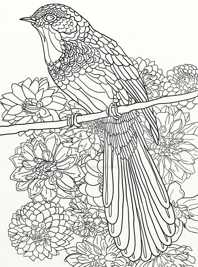 Page 16 Of Australian Birds Adult Coloring Book By LorraineKelly