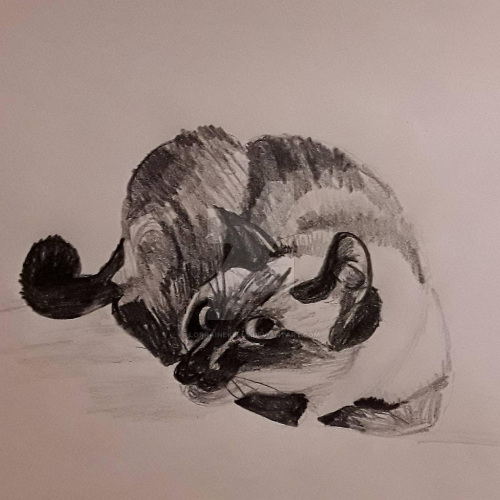 Django resting by LorraineKelly