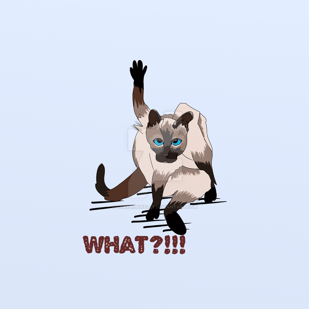 Grumpy Django Siamese Cat Caught Preening Himself! by LorraineKelly