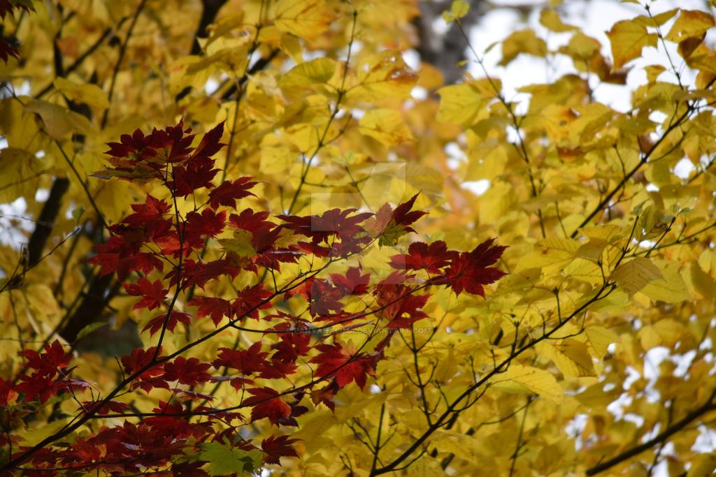 Autmun Leaves at Kamikochi 02 by PanyaHalima