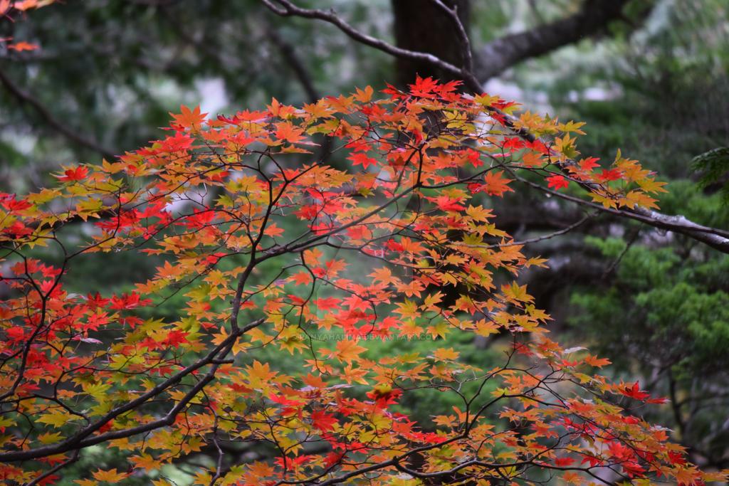 Autmun Leaves at Kamikochi 03 by PanyaHalima