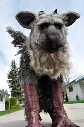 Trico cosplay 2