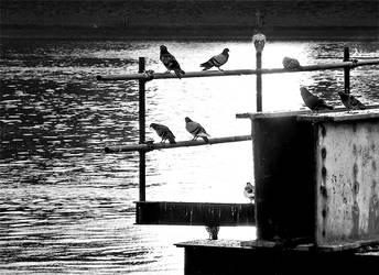 Birds 1 by spns