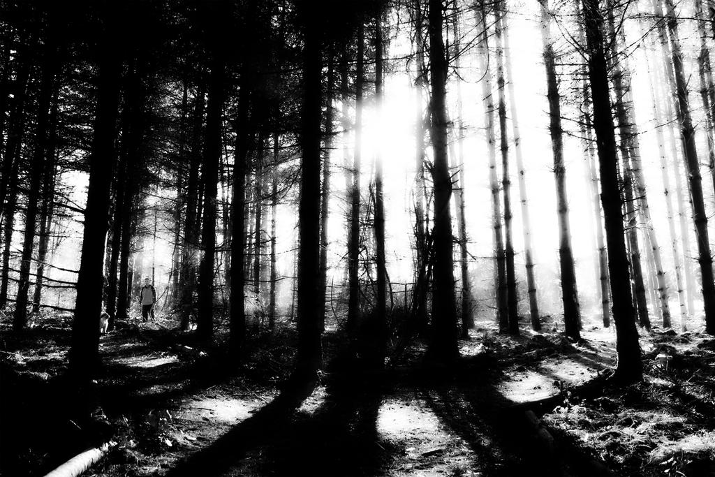 the forest 2 by spns