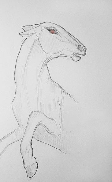 Horse by ElenaBazu