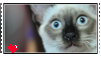 Support siamese stamp by silvazelover2